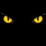 occhi del gatto nel buio, sfondo per Halloween
